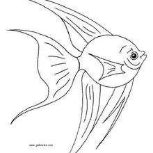 Coloriage d'un poisson - Coloriage - Coloriage ANIMAUX - Coloriage ANIMAUX MARINS - Coloriage POISSON