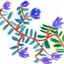 Une fleur - Dessin - Dessin NATURE - Dessin FLEUR - Dessin FLEUR A COLORIER