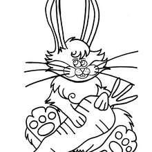 Coloriage d'un lapin et sa carotte - Coloriage - Coloriage ANIMAUX - Coloriage ANIMAUX DOMESTIQUES - Coloriage LAPIN