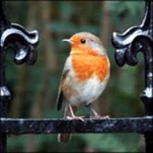 Fabrique une mangeoire pour les oiseaux et apprends à reconnaître tes visiteurs...