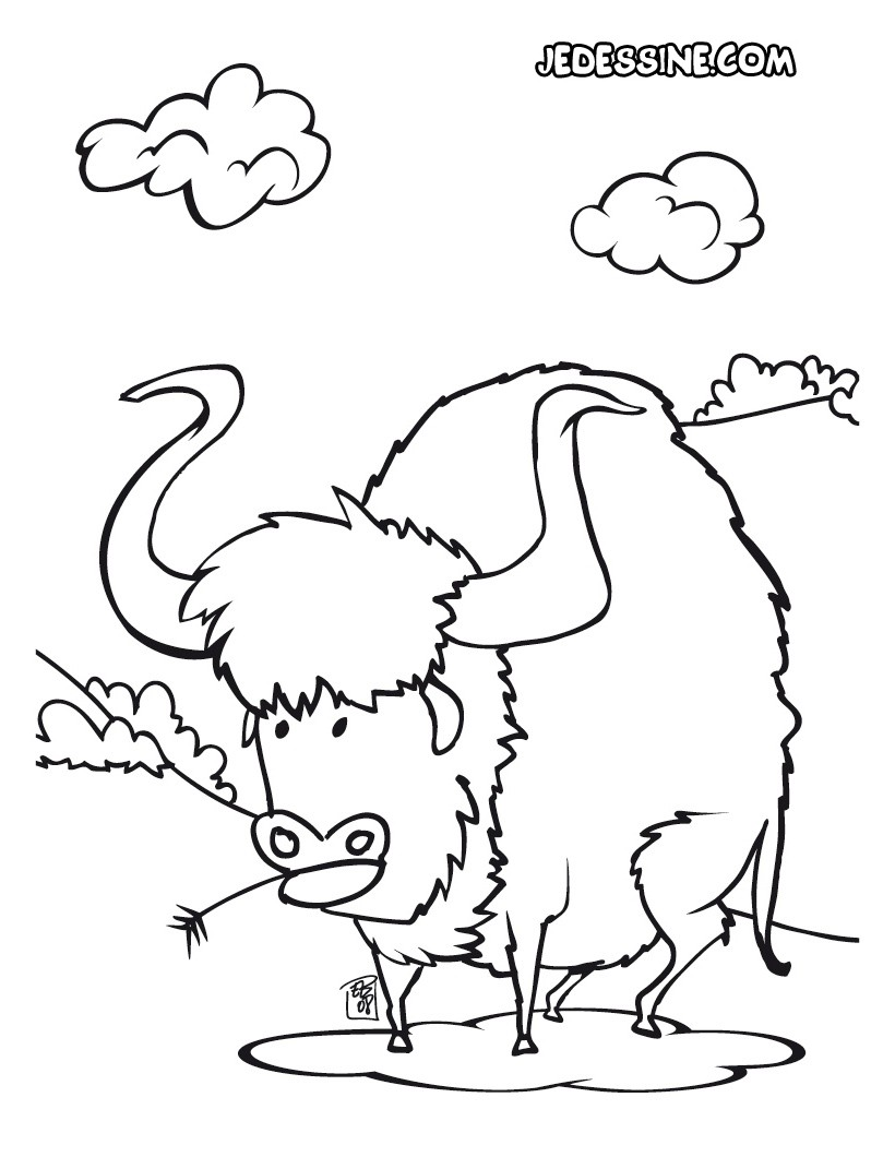 Coloriage d'un bison