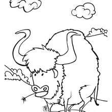 Coloriage d'un bison - Coloriage - Coloriage GRATUIT - Coloriage GRATUIT WESTERN - Coloriage WESTERN GRATUIT