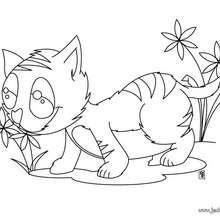 Coloriage : Chat au milieu de fleurs