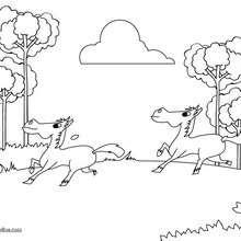 Coloriage : Chevaux au galop