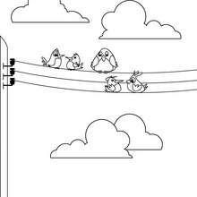 Coloriage d'oiseaux sur des fils electriques - Coloriage - Coloriage ANIMAUX - Coloriage OISEAU - Coloriages OISEAUX
