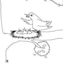 Coloriage d'oisillons dans un nid - Coloriage - Coloriage ANIMAUX - Coloriage OISEAU - Coloriages OISEAUX