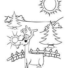 Coloriage d'un renne de Noël - Coloriage - Coloriage FETES - Coloriage NOEL - Coloriage RENNES DU PERE NOEL - Coloriages RENNES DU PERE NOEL
