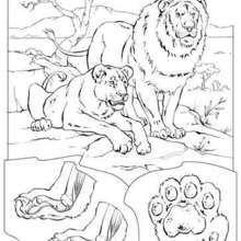 Coloriage de félins - Coloriage - Coloriage ENFANT