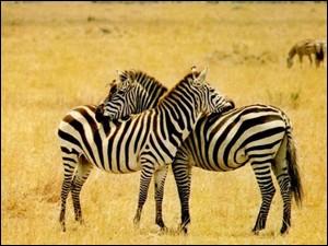 site de rencontre zebres Fréjus