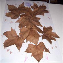 Ta composition de feuilles de saison. - Activités - BRICOLAGE DECO