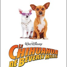 Film : LE CHIHUAHUA DE BEVERLY HILLS