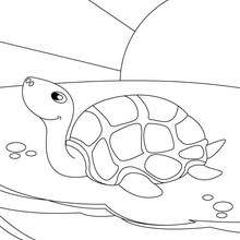 Coloriage d'une tortue de mer