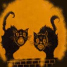 Les chats sorciers
