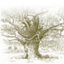 Le vieux chêne - Lecture - CONTES pour enfant - CONTES ANIMAUX