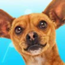 La Beat BOX de Papi le Chihuahua de Beverly Hills - Jeux - Jeux films et dessins animés