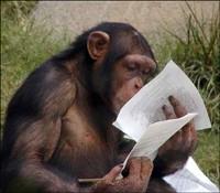 singe-intelligent2