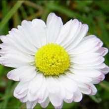Les fleurs du Printemps - Lecture - REPORTAGES pour enfant - Divers