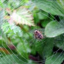 L'araignée - Lecture - REPORTAGES pour enfant - Fiches pédagogiques sur les animaux - Dossier sur les insectes