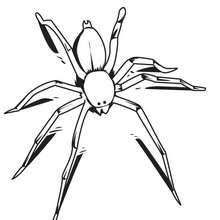 Coloriage d'une araignée - Coloriage - Coloriage ANIMAUX - Coloriage INSECTE - Coloriage ARAIGNEE