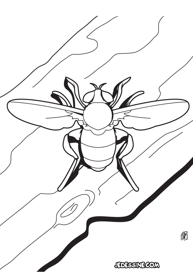 Coloriage d'une mouche