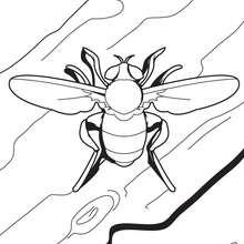 Coloriage d'une mouche - Coloriage - Coloriage ANIMAUX - Coloriage INSECTE - Coloriage MOUCHE
