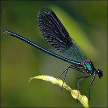 La libellule - Lecture - REPORTAGES pour enfant - Fiches pédagogiques sur les animaux - Dossier sur les insectes