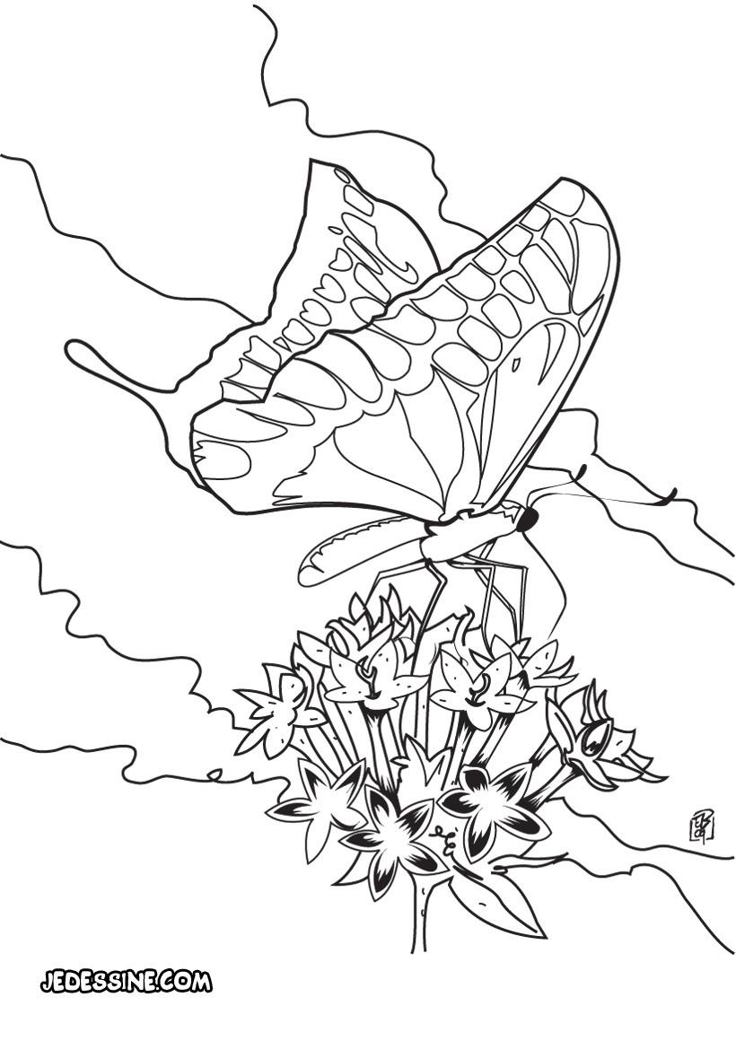 Coloriages le papillon se pose sur une fleur - Coloriage de papillon ...