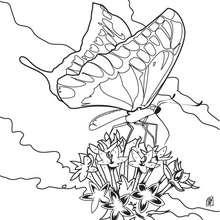 Coloriage : Le papillon se pose sur une fleur