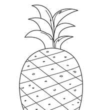 Coloriage d'un ananas - Coloriage - Coloriage NATURE - Coloriage FRUIT - Coloriage ANANAS