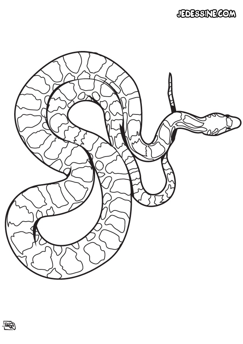 Coloriages coloriage d 39 un boa - Tete de serpent dessin ...