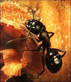 Contes pour enfants les fourmis lire - Dessin d une fourmi ...