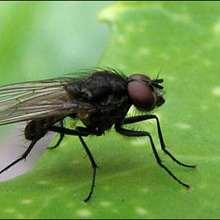 La mouche - Lecture - REPORTAGES pour enfant - Fiches pédagogiques sur les animaux - Dossier sur les insectes