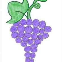 Dessiner une grappe de raisin - Dessin - Apprendre à dessiner - Dessiner des fruits