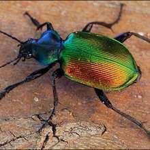 Le scarabée - Lecture - REPORTAGES pour enfant - Fiches pédagogiques sur les animaux - Dossier sur les insectes