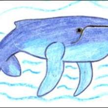 Tuto de dessin : Une baleine à bosse