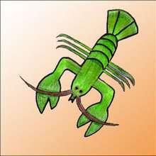 Dessiner un homard - Dessin - Apprendre à dessiner - Dessiner des poissons