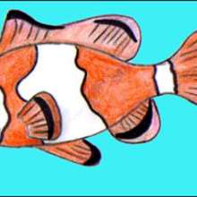 Tuto de dessin : Un poisson-clown