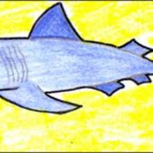 Dessiner un requin - Dessin - Apprendre à dessiner - Dessiner des poissons