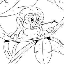 Coloriage d'un bébé singe dans les branches - Coloriage - Coloriage ANIMAUX - Coloriage ANIMAUX DE LA JUNGLE - Coloriage SINGE