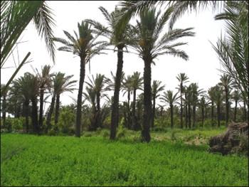 OASIS-EN-TUNISIE
