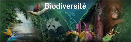 biodiversite2