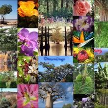 Reportage : La Biodiversité