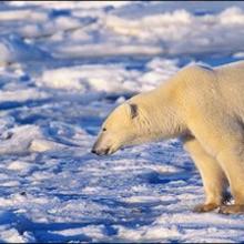Le réchauffement climatique - Lecture - REPORTAGES pour enfant - Les Sciences - Le développement durable expliqué aux enfants
