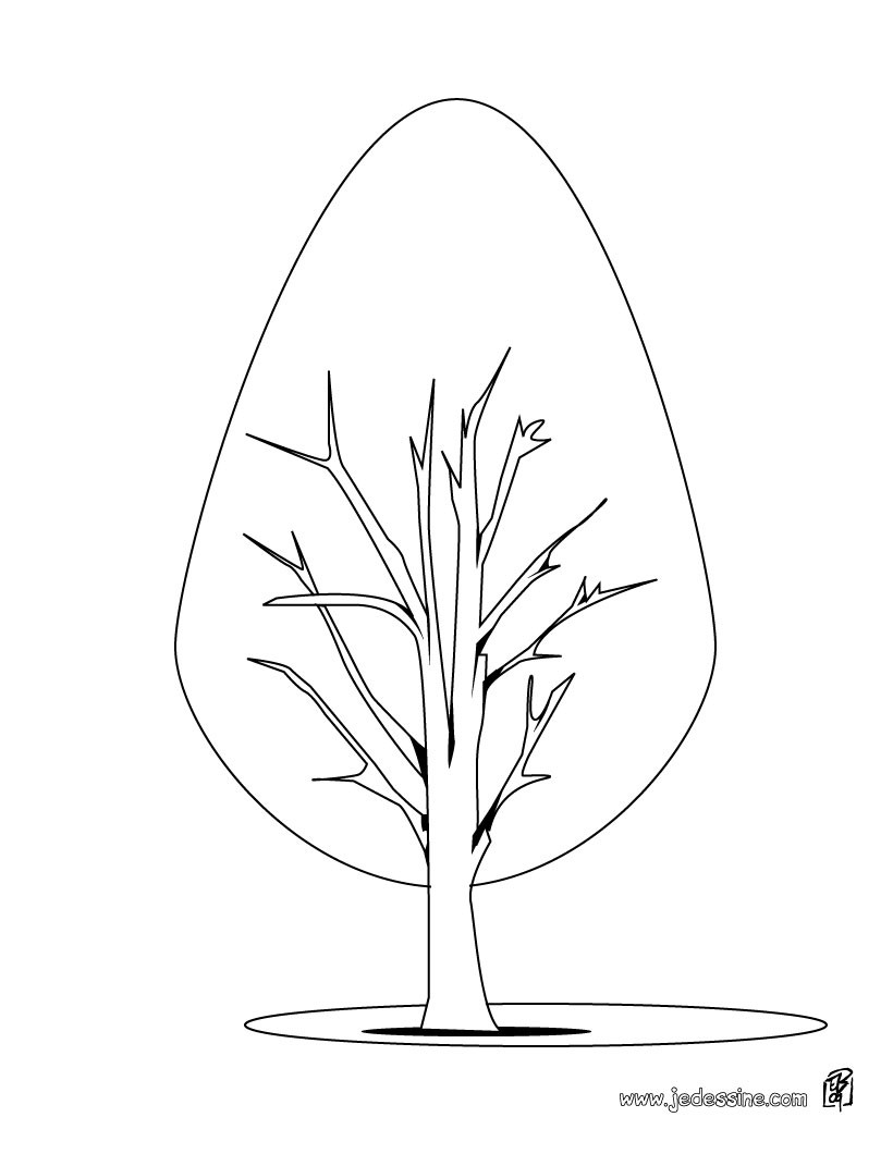 Photo Coloriage Arbre.Coloriage Arbre Coloriages Coloriage A Imprimer Gratuit Fr