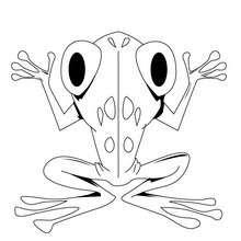 Coloriage d'une grenouille - Coloriage - Coloriage ANIMAUX - Coloriage ANIMAUX SAUVAGES - Coloriage GRENOUILLE - Coloriage GRENOUILLE A IMPRIMER