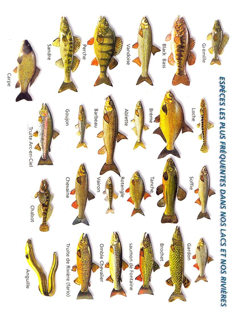 liste-de-poissons