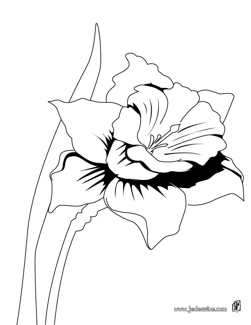 coloriages coloriage d'une orchidée - fr.hellokids