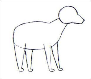 Apprendre a dessiner un yorkshire - Dessiner un yorkshire ...