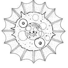 Mandala : Coloriage de l'amibe coquille