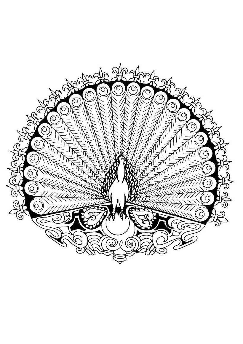 Coloriage de l amibe coquille Coloriage du mandala du Paon